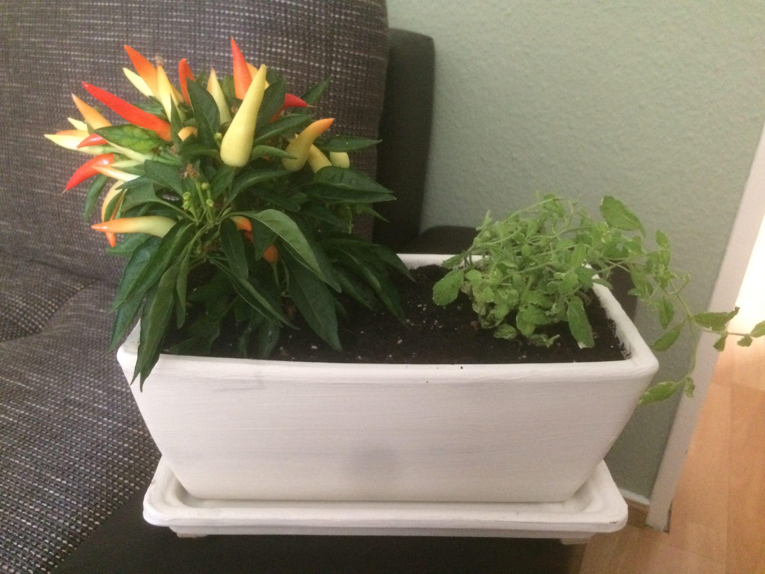 Dein kleiner Kräutergarten
