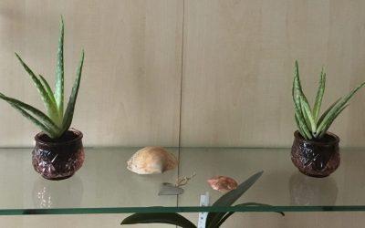 Upcycling: Duftkerzengläser für Mini-Blumen